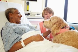 Home Care St. Clair Shores MI: Could Your Parent Benefit from a Service Dog Like Sully?